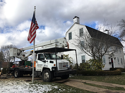 tree services ct
