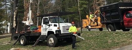 tree removal service ct