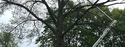 tree trimming ct